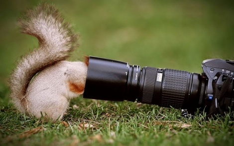 very-curious-squirrel